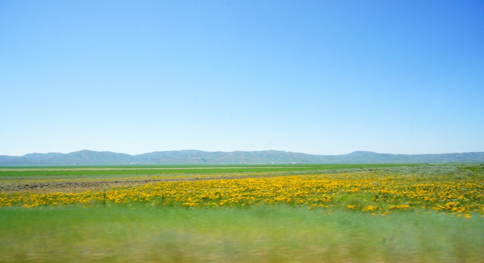 A photograph showing great colors from yellow flowers to a bright blue sky