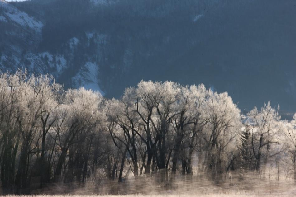 Frozen_Trees