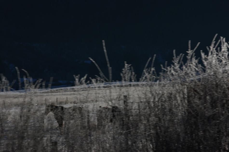 Icy_Horse