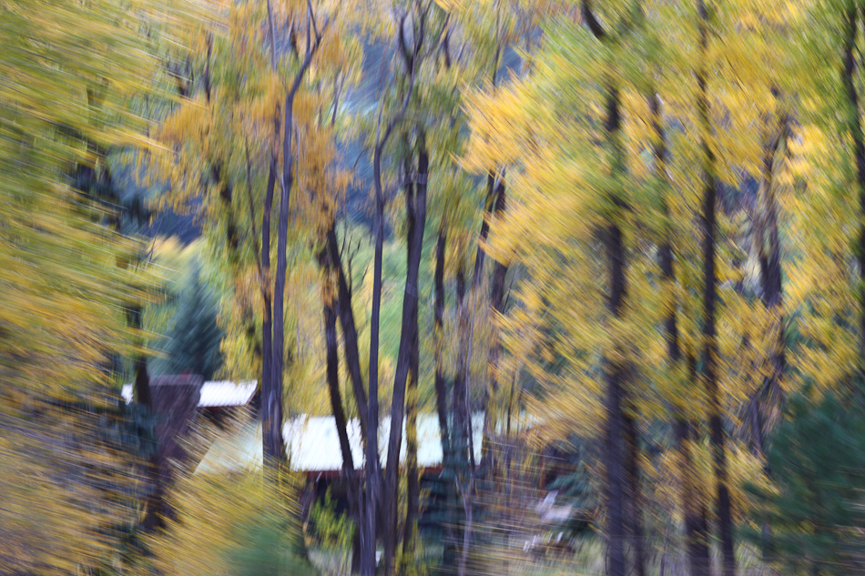 Fall_leaves_Staver_01