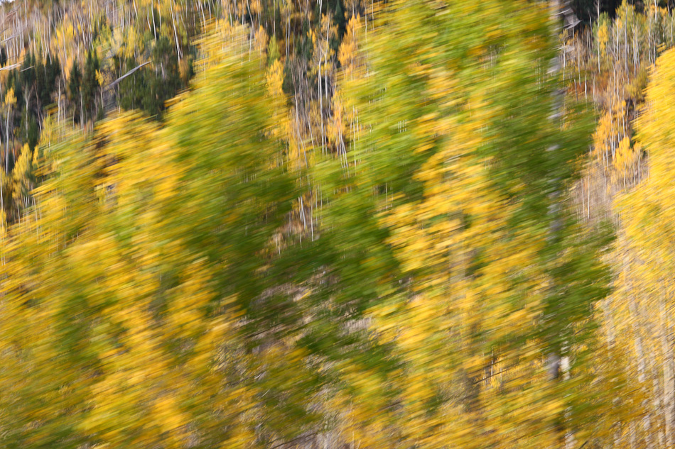 Fall_leaves_Staver_02