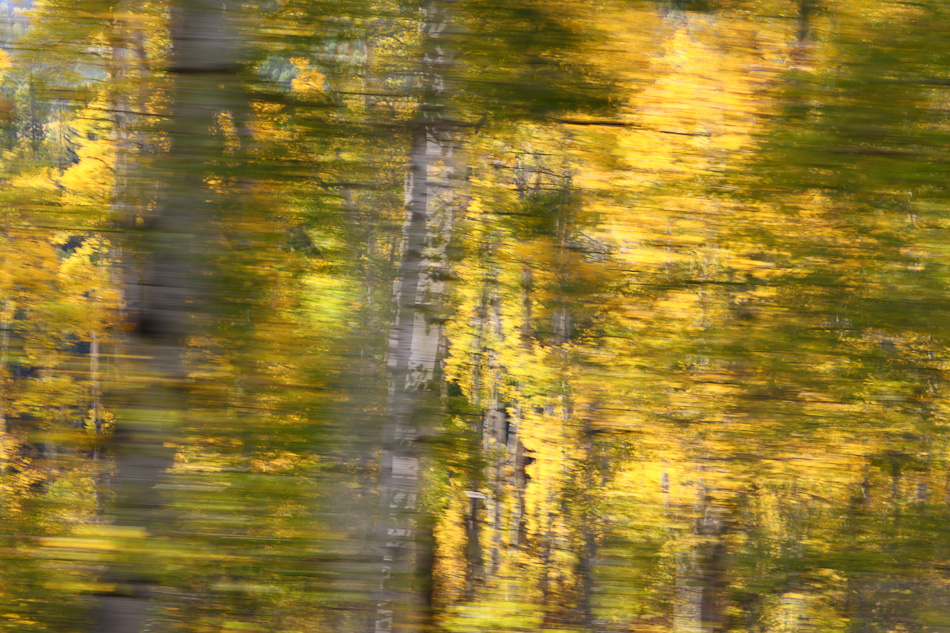 Fall_leaves_Staver_03