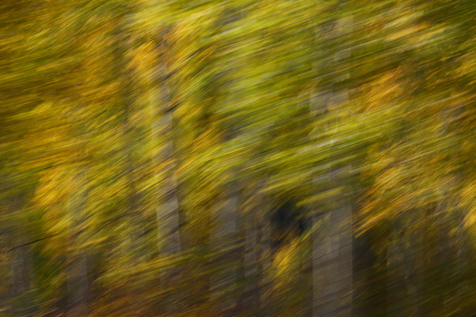 Fall_leaves_Staver_05