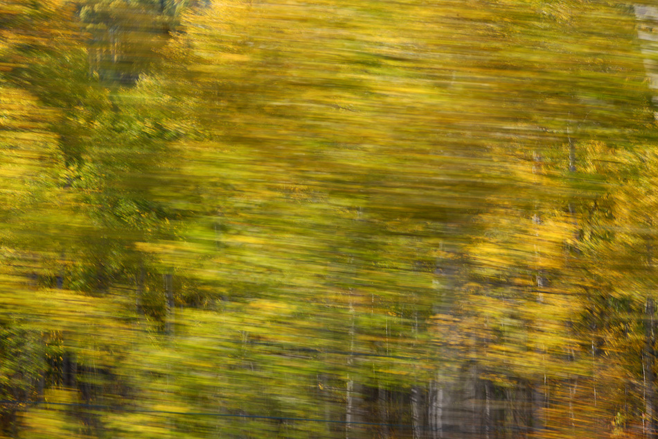 Fall_leaves_Staver_07