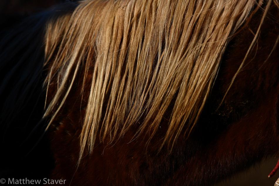 WildHorses_staver_072