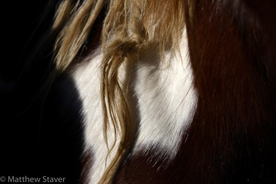 WildHorses_staver_074