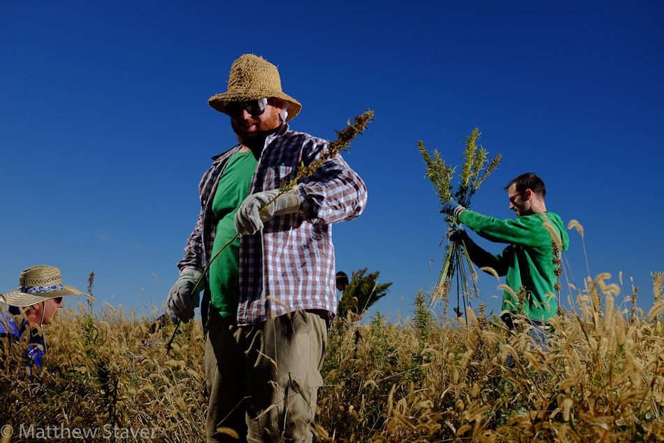 Hemp_Colorado_staver_019