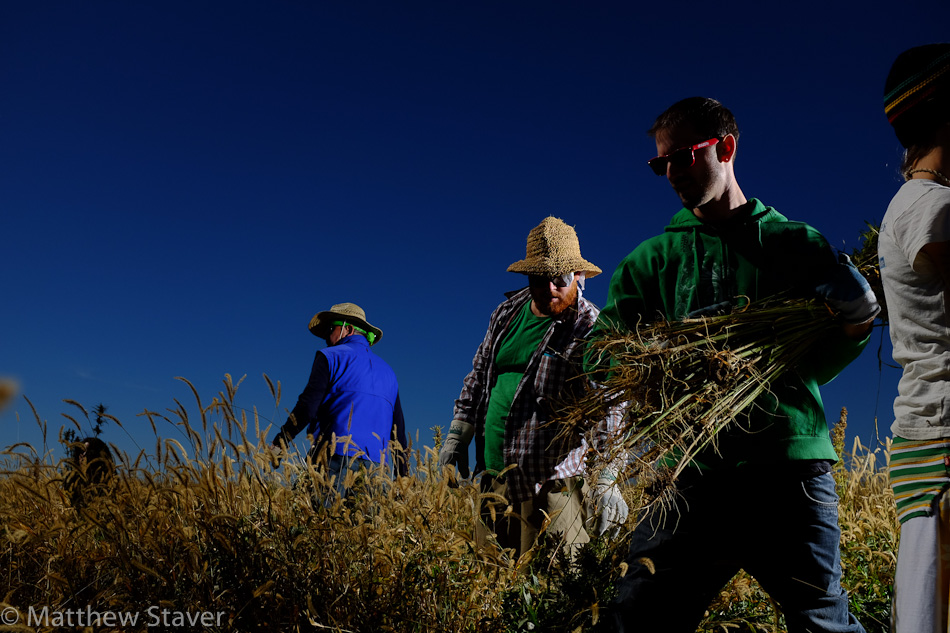 Hemp_Colorado_staver_020