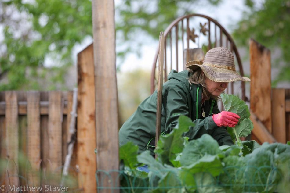 Urban_Farm_staver_660
