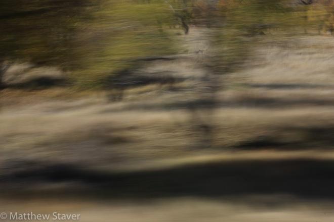 Staver_moody_trees