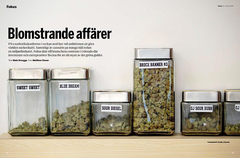 Fokus_cannabis-1_staver